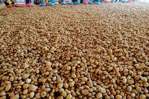 Farm Fresh Potato Manufacturers In Sant Kabir Nagar
