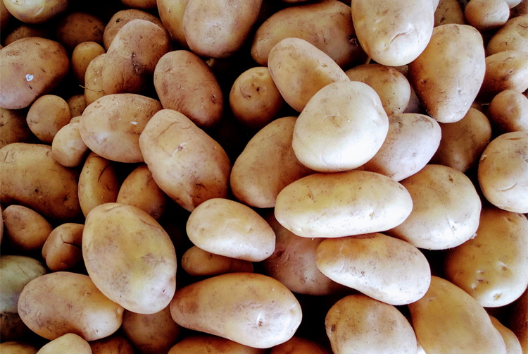 Fresh Potato Manufacturers In Sant Kabir Nagar
