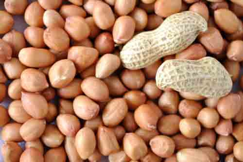 Groundnut Kernels In Botad