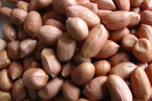 Natural Peanut Kernels Manufacturers In Madagascar