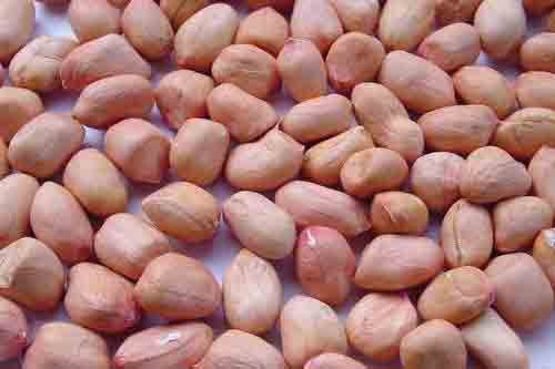 Organic Peanut Kernels Manufacturers In Greater Kailash