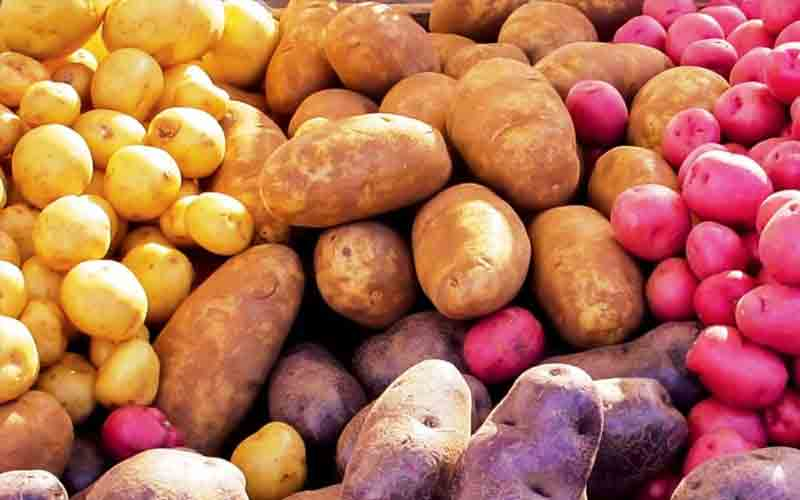 Farm Fresh Potato Producer In Sant Kabir Nagar