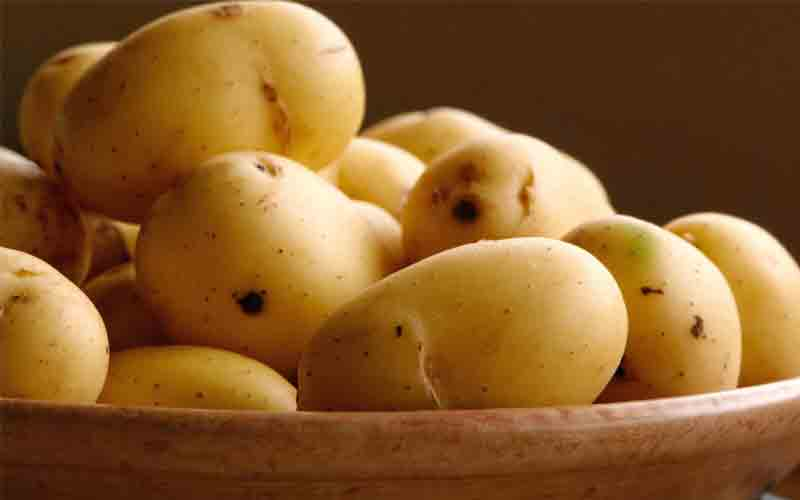Fresh Potato Exporters In Sant Kabir Nagar
